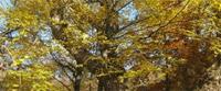 Kampanja za očuvanje bresta