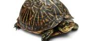 Ko sam da sam ja sam kornjača