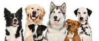 22. Međunarodna izložba pasa