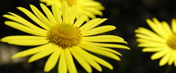 Sajam cveća 2011