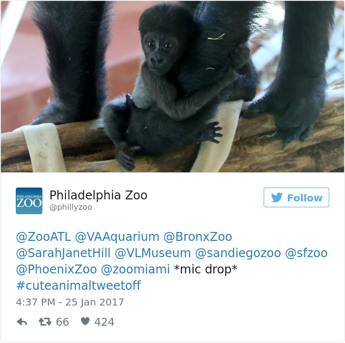 cute-zoo-animal-tweet-off-13