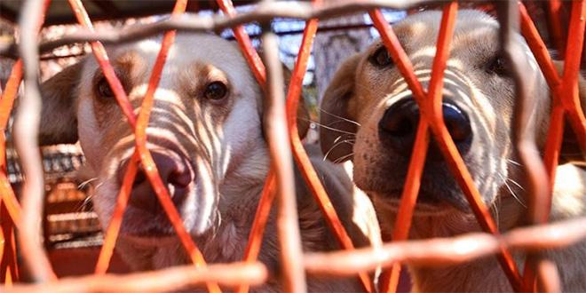 Još ništa od azila za pse u Nišu