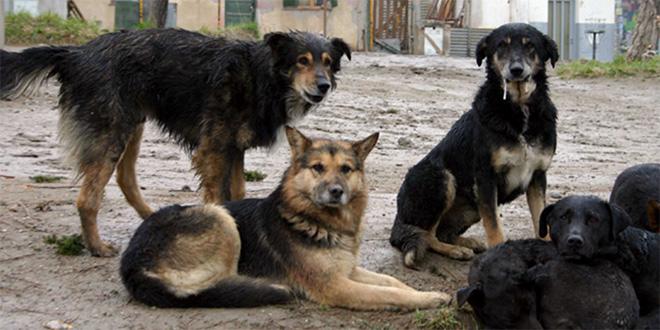 Ne ubijajte pse; Grad: Nema eutanazije, azil rešenje