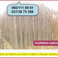 Najkvalitetnije voćne sadnice u Srbiji